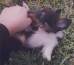 Chloe chewing